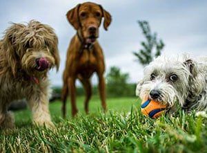 Dog Daycare Brownsburg, Indianapolis IN