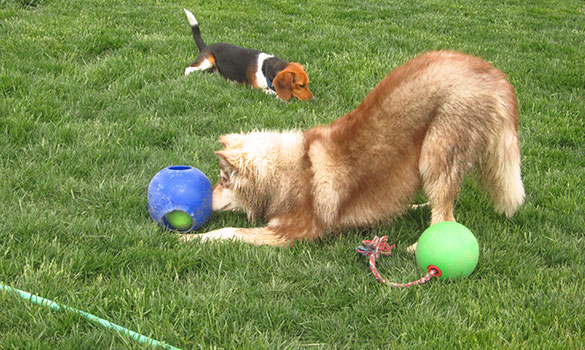 Dog Daycare Carmel IN